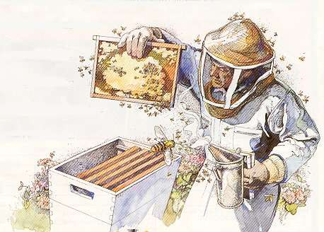 Join SKF Beekeepers Association